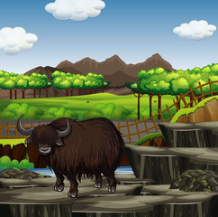Scene with buffalo in the forest