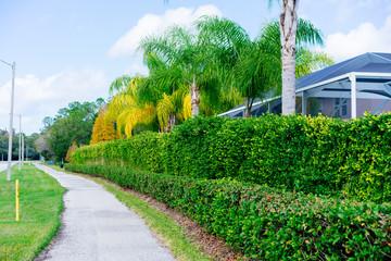 Aluminium Prints Green Fall tree and leaf in Florida