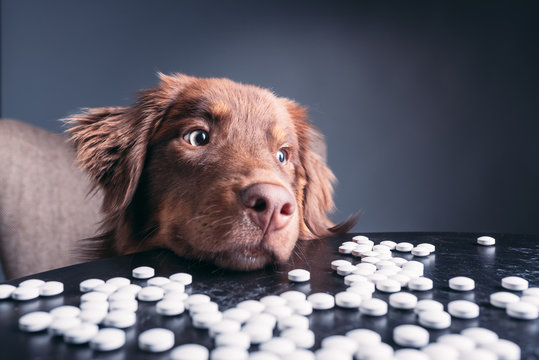 Hund mit Tabletten
