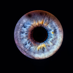 Spoed Fotobehang Iris Closeup of an human eye