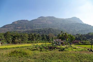Beautiful Rice Paddy Fields