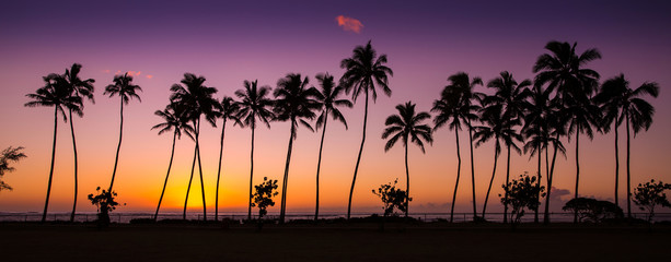 Photo sur Aluminium Palmier tropical sunrise with palm trees at dawn in the town of Kapaa, Kauai, Hawaii