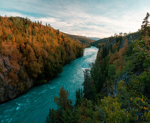 Wall Murals Forest river Kenai River flowing blue among Alaska's autumn colors