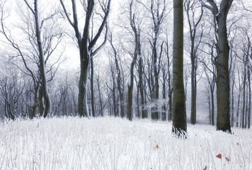 Forest in winter with fog and snow landscape