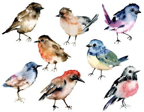 Birds, set watercolor painting. Wildlife illustration isolated on white background.