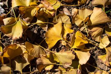 紅葉する秋の葉っぱ