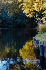 日本庭園の池を泳ぐ鯉