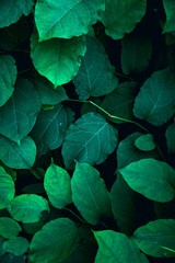 green plant leaves textured in the nature, green background