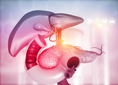 Anantomy of Liver  stomach  pancreas  gallbladder and spleen on medical background. 3d illustration.