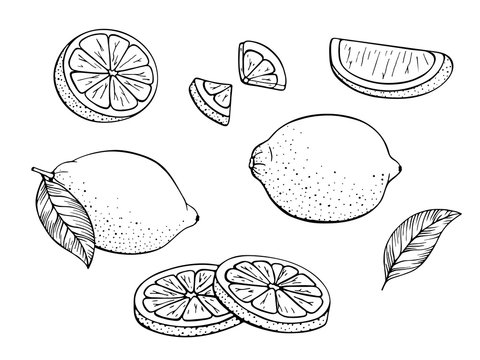 Collection fresh lemons. Set of citrus fruits. Lime, slices, plant leaf, cut pieces, leaves. Design elements. Hand drawn sketch. Vector illustration Isolated on white background. Coloring book page.