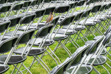 bird on audience chairs