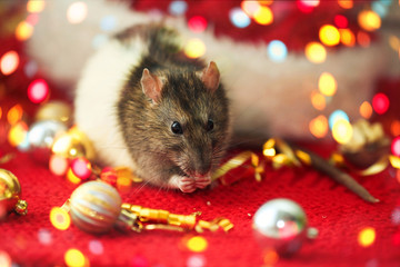 The  rat eats close-up against the background of the New Year is decoration.