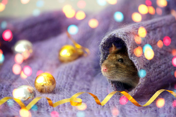 The rat is face looks like a knitted sweater sleeve. New year 2020 concept, Chinese year rat.