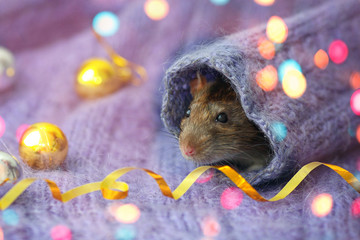 The rat is face looks like a knitted sweater sleeve. Christmas toys, bokeh .