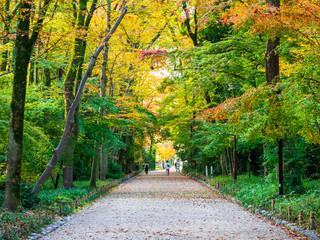秋の京都 下鴨神社 参道