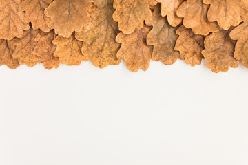 Autumn curtain of oak leaves on white background top view with copyspace
