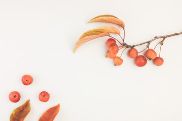 Autumn composition leaves and branch of malus floribunda on white background top view flat lay copyspace