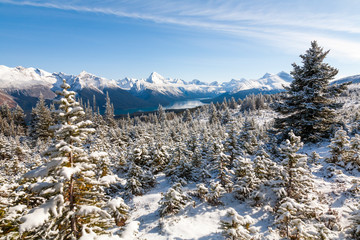 Snow Covered Fir Trees on Bald Hills, Jasper National Park, Canada with Maligne Lake and Samson Peak in the background