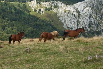 Horses on a meadow in Urkiola National Park in Spain,Europe