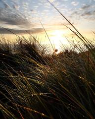 Morgenliche Stimmung auf Insel Sylt