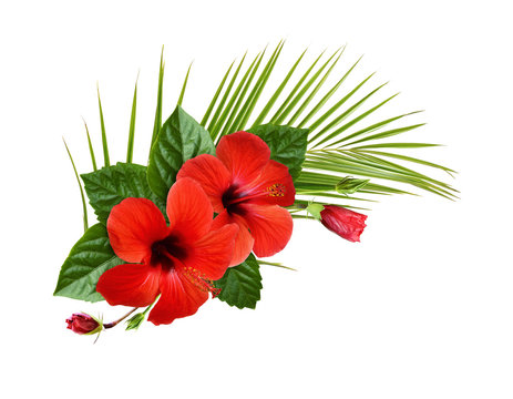 Red hibiscus flowers, buds and green leaves in a tropical corner arrangement