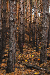 Moody Image of Woodland at Fall. Bokeh and Blurred Background