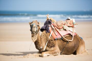 Foto op Plexiglas Marokko Essaouira, Maroc