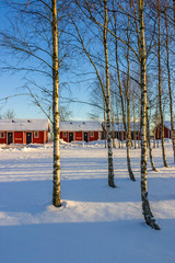 Red holiday cottages in a winter landscape in a birch grove