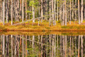 Lakeside with pine trees with reflections in the water