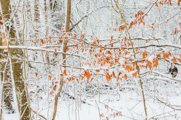 Autumn leaves in the forest with snow