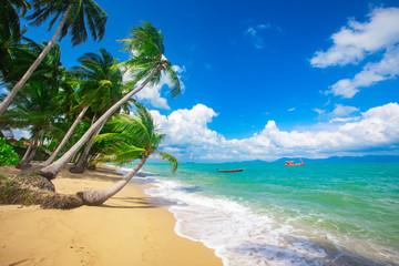 Fototapeta beach and coconut palm trees. Koh Samui, Thailand obraz