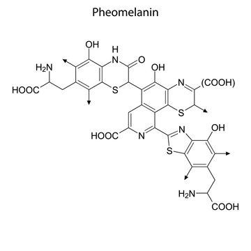 pheomelanin Skeletal formula of Chemical element