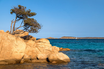 Capticcioli beach in Costa Smeralda, Sardinia, Italy. Rocks and mediterranean pine trees on the shore, sea with azure turquoise crystal clear water. Holidays, the best beaches in Sardinia.