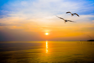 Poster de jardin Oiseau Pair of seagulls in yellow, orange, blue sky at sunrise, Animal in beautiful nature landscape for background, Two birds flying above the sea, water or ocean and horizon at sunset in Bang Pu, Thailand