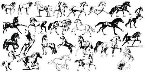 Hand drawn horse. Vector isolated on a transparent background.