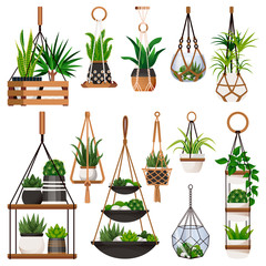 House plants in hanging macrame pots, isolated on white background. Vector flat illustration of green potted houseplants