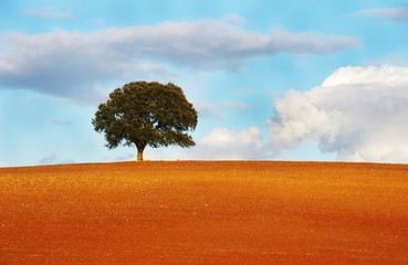 one tree in field of alentejo region