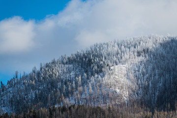 Beautiful winter landscape of trees on a mountaintop covered in snow and ice