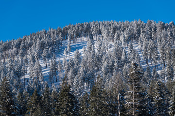 Forested mountaintop with pine and spruce trees covered in snow and ice