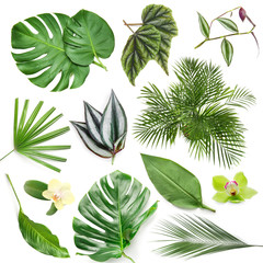 Wall Mural - Set of green tropical leaves on white background