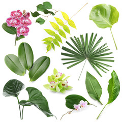 Wall Mural - Set of green tropical leaves and flowers on white background