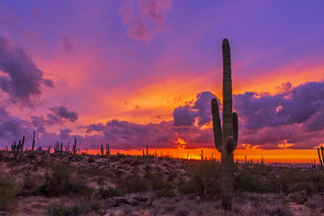 Zelfklevend Fotobehang Arizona Cactus At Sunset in Arizona