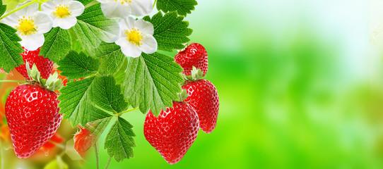 summer tasty red ripe strawberry