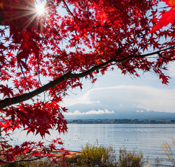 Deurstickers Bruin Landscape Mt.Fuji Autumn season at Kawaguchiko lake with cloudy day,Japan