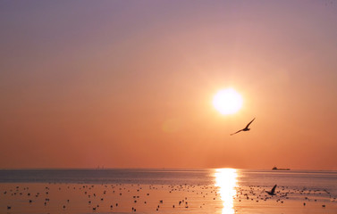 Photo sur Aluminium Corail Beautiful sky on sunset or sunrise with flying birds to the sun, natural background