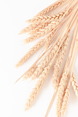 Fototapeta Bouquet of wheat spikelets on white background obraz