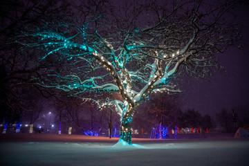 In de dag Bomen Holiday lights decoration in downtown Boulder, Colorado
