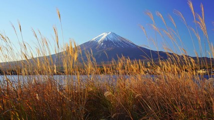 Wall Mural - Mountain fuji with grass foreground, Kawaguchiko Lake, Japan