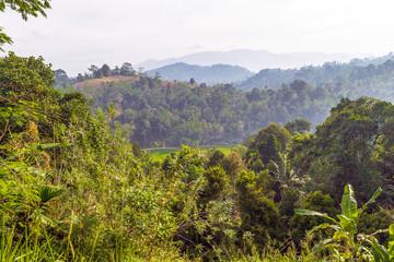 mist morning rainforest Mountain