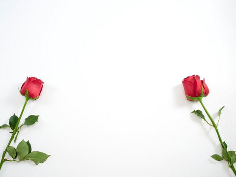Valentine's Day card. Two red rose.